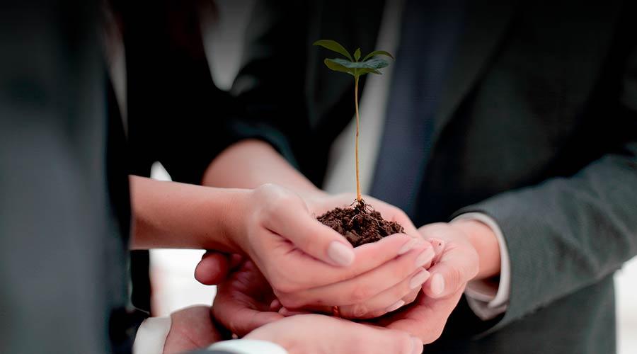 Sembrando valor en las organizaciones